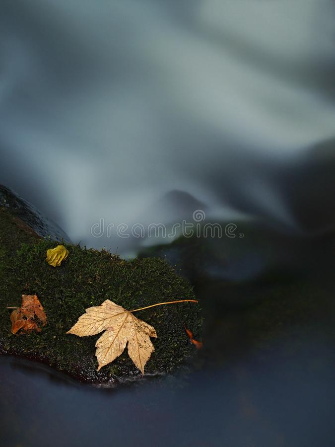 Download Orange Maple Leaf On Mossy Stone Below Increased Water Level. Royalty Free Stock Photo - Image: 34994105
