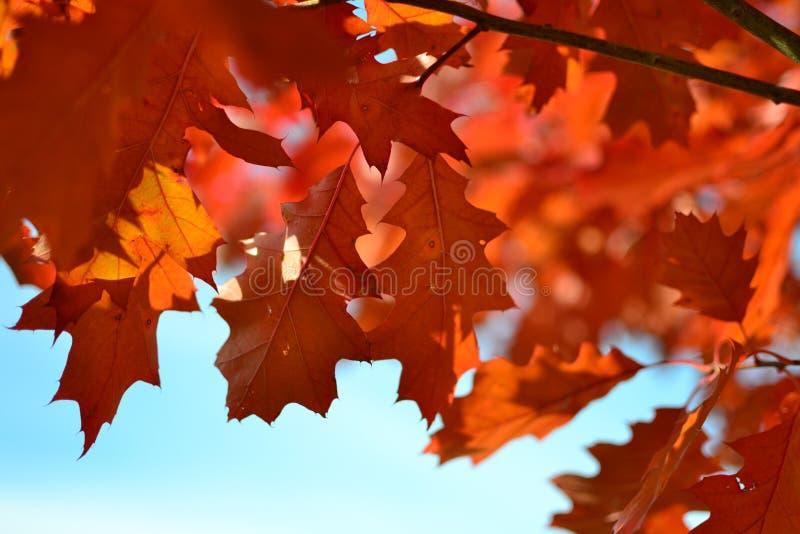 Orange Maple Tree During Daytime Free Public Domain Cc0 Image