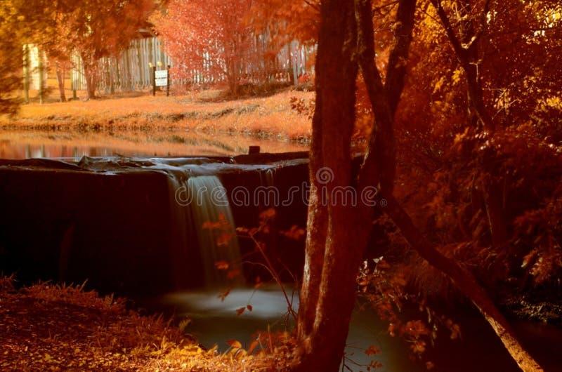 Orange Maple Trees Painting stock images