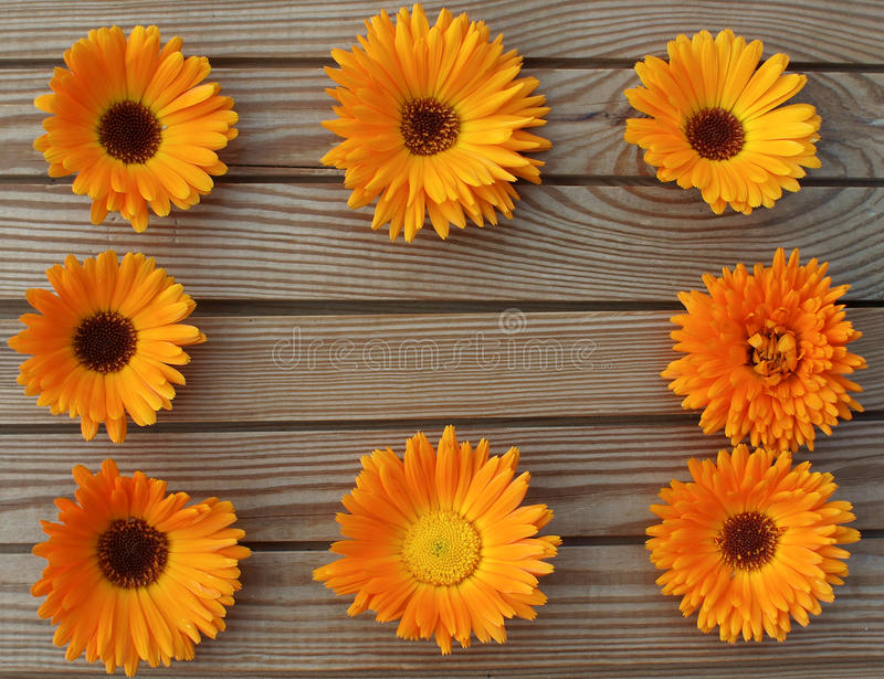 Orange marigold on a wooden boards background stock image