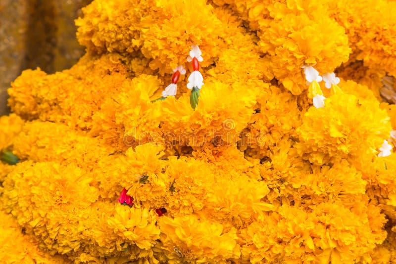 Orange Marigolds stock images