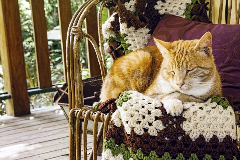 Orange marmalade cat on chair. A contented ginger house cat sitting at rest on a chair on a veranda giving a sense of peace and home