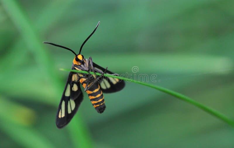 Download An Orange Moth stock image. Image of orange, green, moth - 26554977