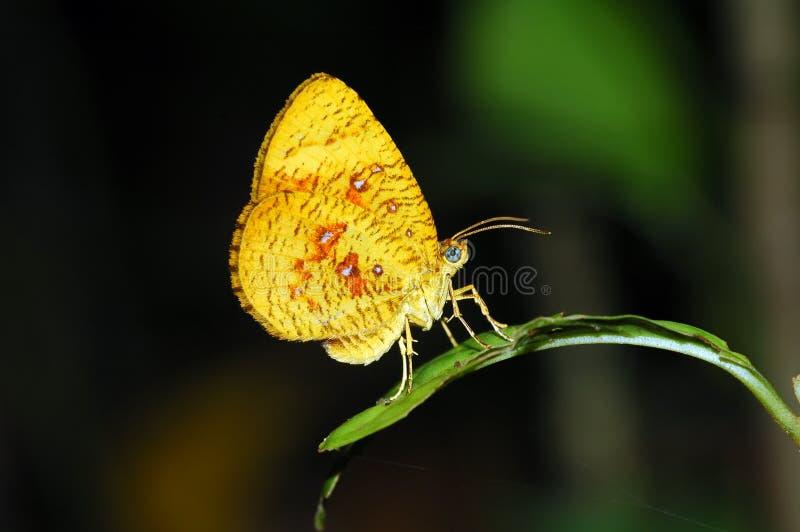Orange moth butterfly