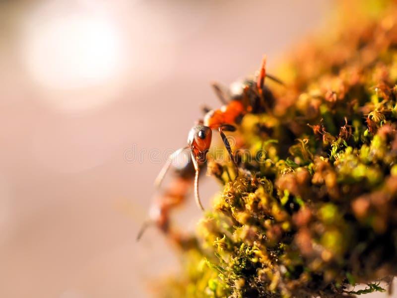 Orange myra på grön mossa medan liten värld för utforskare fotografering för bildbyråer