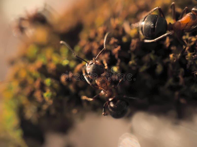 Orange myra på grön mossa medan liten värld för utforskare arkivfoton