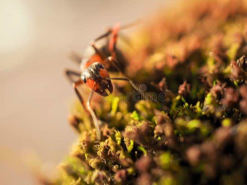 Orange myra på grön mossa medan liten värld för utforskare arkivfoto