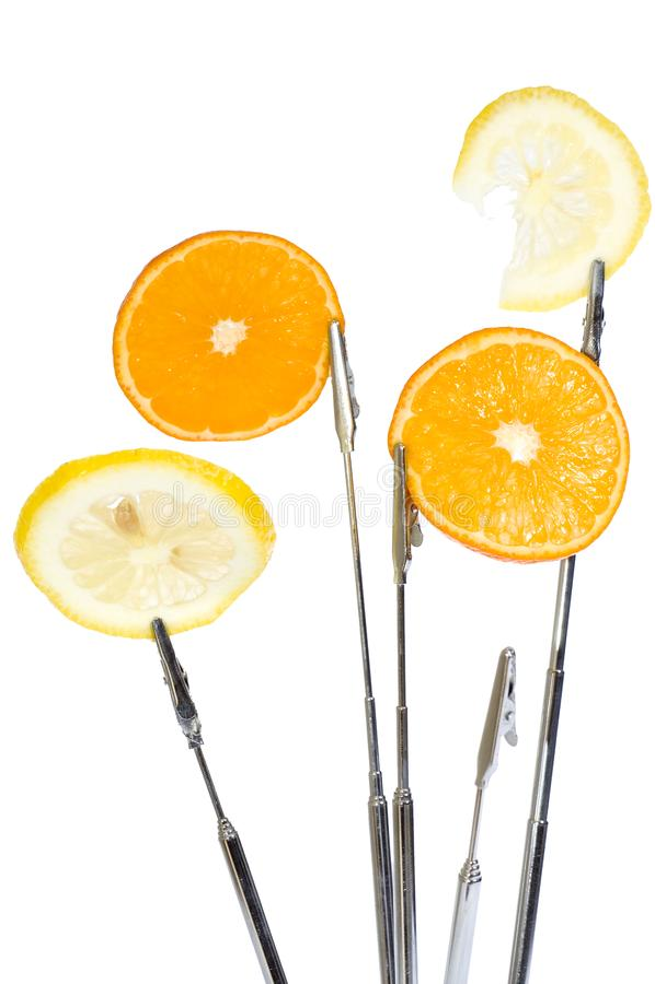 Orange office tree stock photo