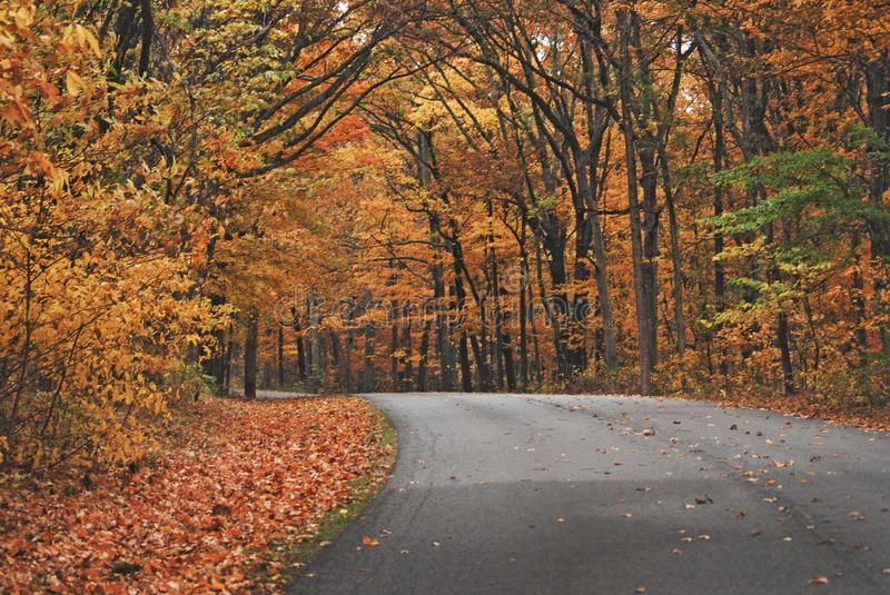An orange pathway of trees in autumn at Brown County State Park. royalty free stock photo