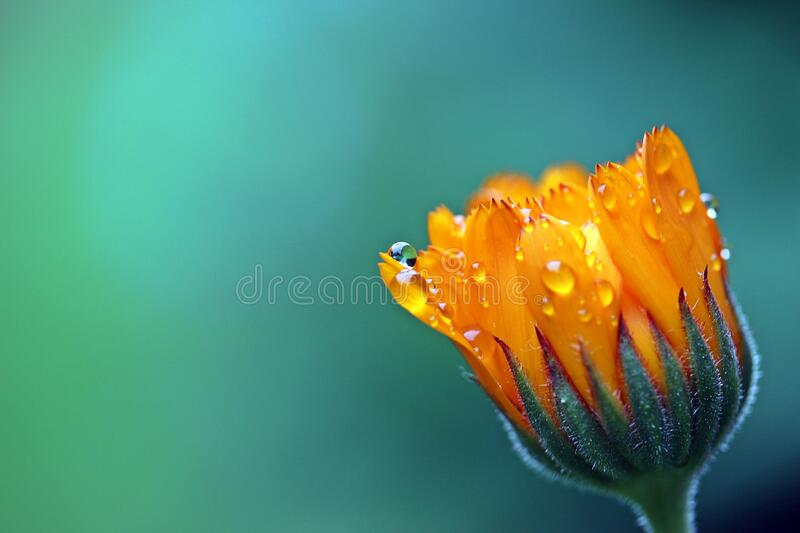 Orange Petaled Flower stock images