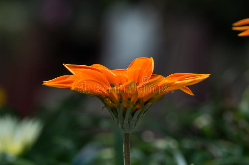 Orange Petaled Flower Selective Focus Photography royalty free stock photos