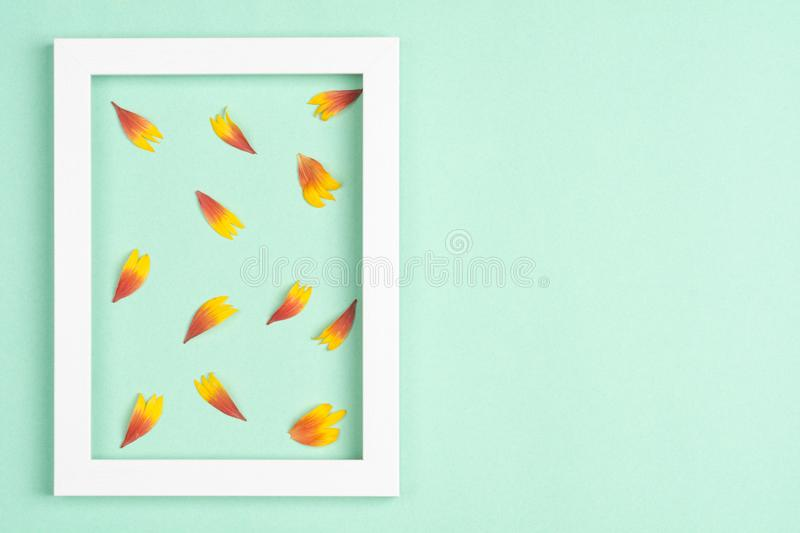 Orange petals, photo frame on a mint background. Top view, copy space. Flat lay stock image