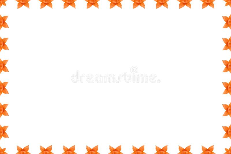 Orange physalis background, frame and border, copy space photo vector illustration