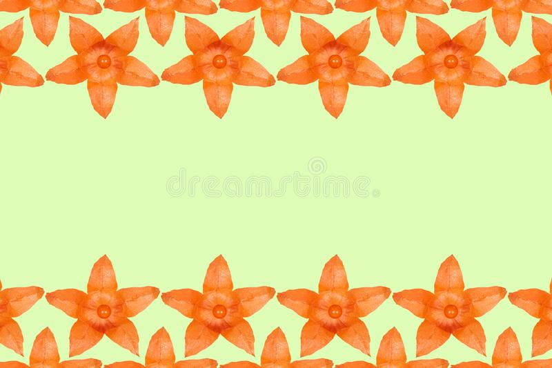 Orange physalis pattern background, flat lay with copy space.  royalty free illustration