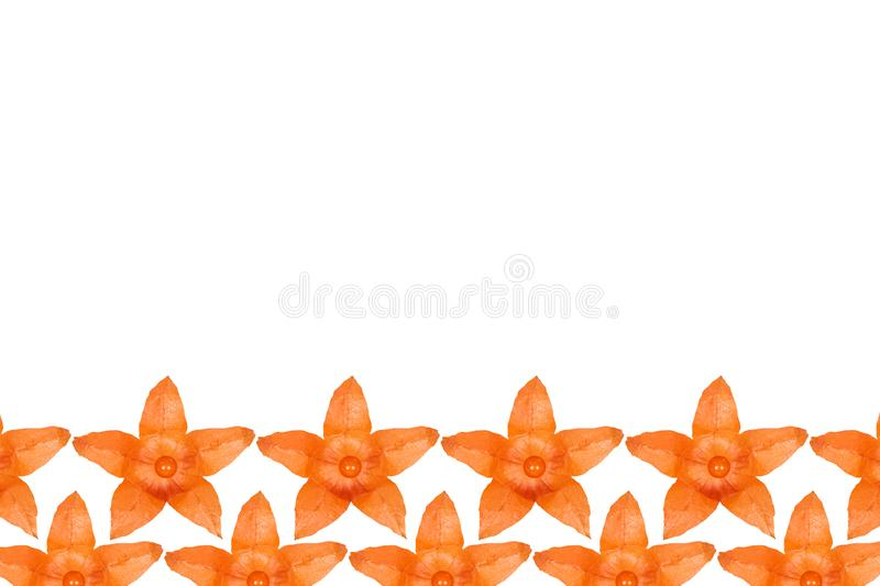 Orange physalis pattern background, flat lay with copy space.  stock illustration