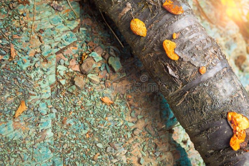 ORANGE PILZ auf dem Baum lizenzfreie stockfotos