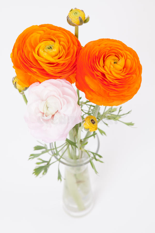 Orange and pinkish Buttercups in glass vase stock photo