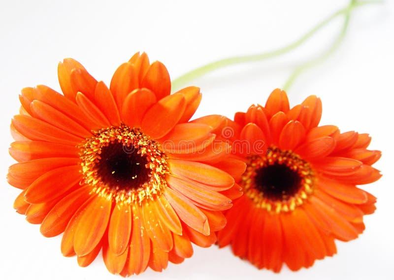 Orange Profonde Photos stock