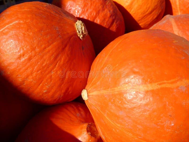 Orange pumkins von einer Herbsternte stockbild