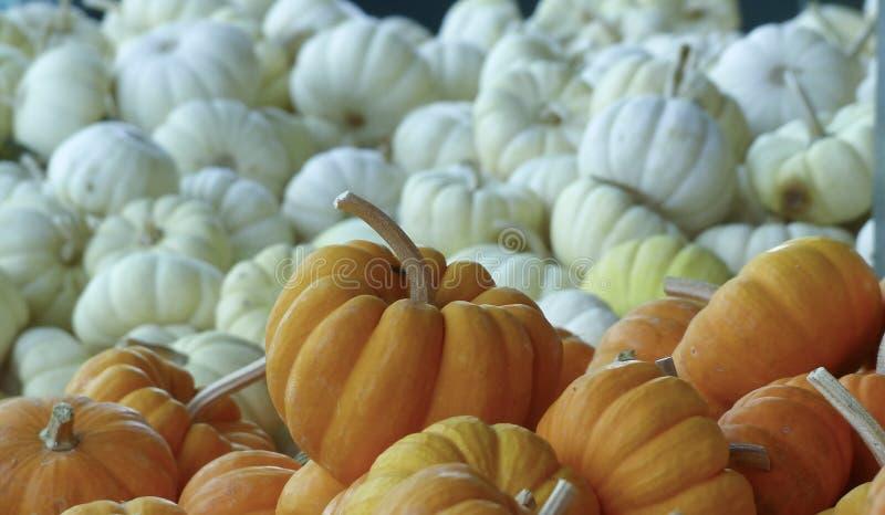 Orange Pumkins-Weiß-Kürbise stockfotos