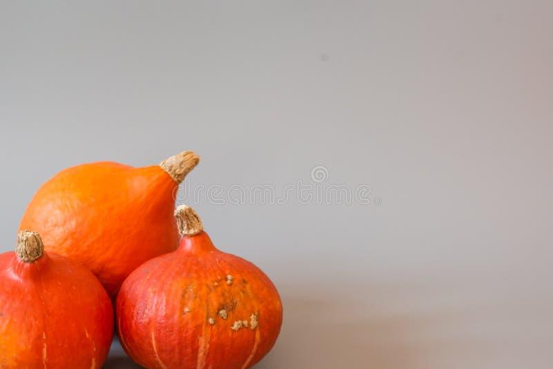 Orange pumpa på Grey Background arkivfoto