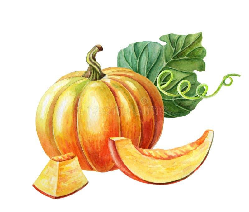 orange pumpa Vattenf?rgillustration p? vit bakgrund Ny vegetarisk mat för höstskörd arkivbild