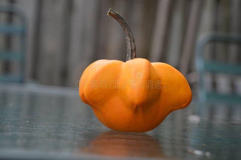 Orange pumpakalebass fotografering för bildbyråer
