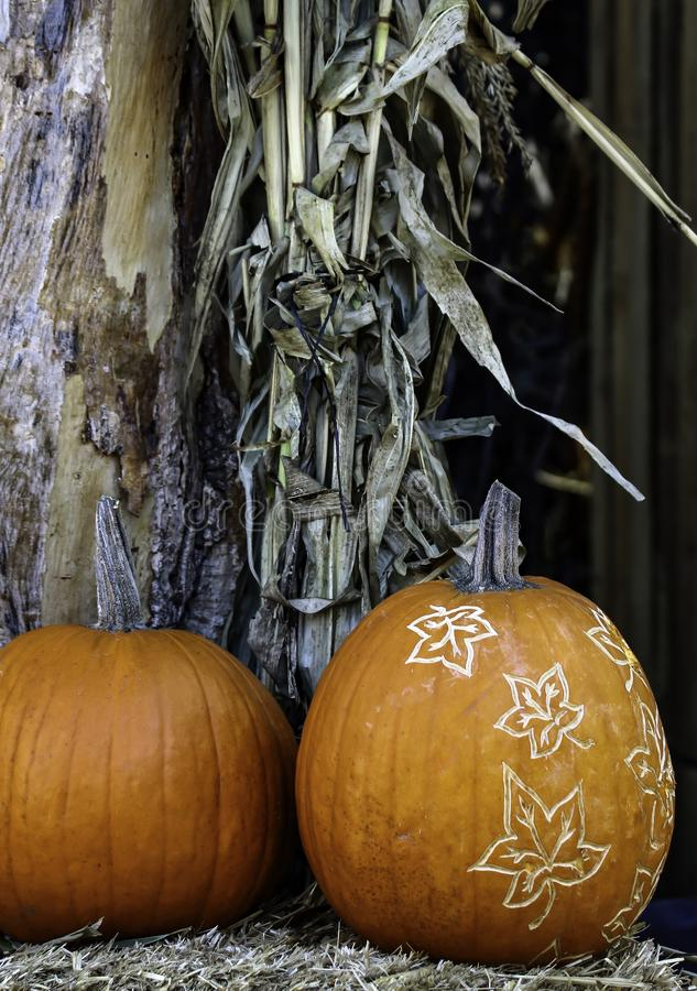 Carved pumpkins in the shadows royalty free stock photo