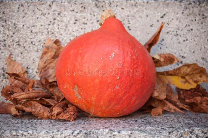 orange pumpkin in outdoor stock images