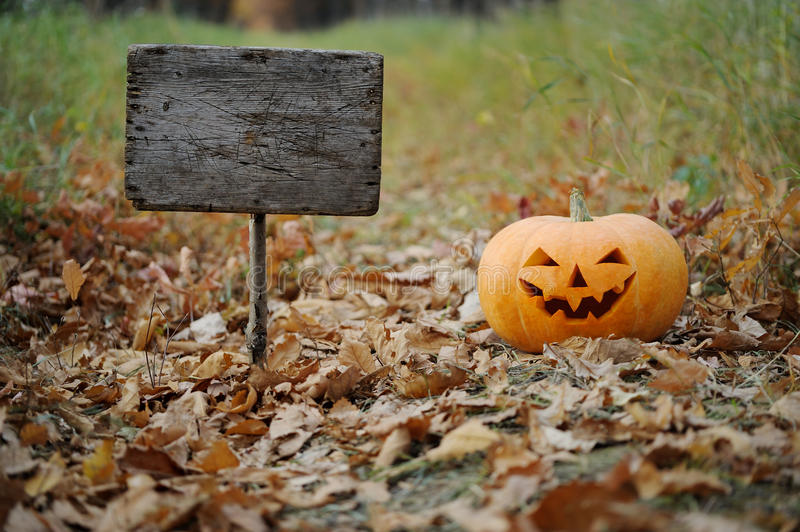 Orange pumpkin is on the road for a holiday Halloween. royalty free stock photography
