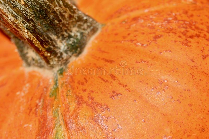 2 007 Pumpkin Stem Texture Photos Free Royalty Free Stock Photos From Dreamstime