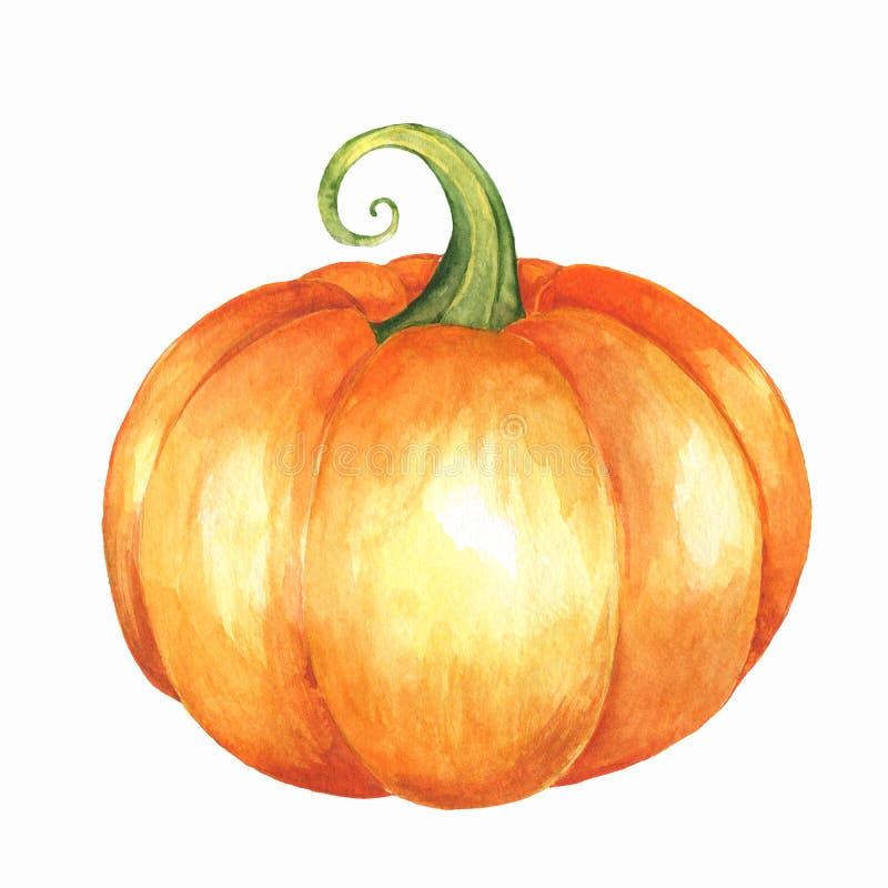 Orange pumpkin. Watercolor illustration vector illustration