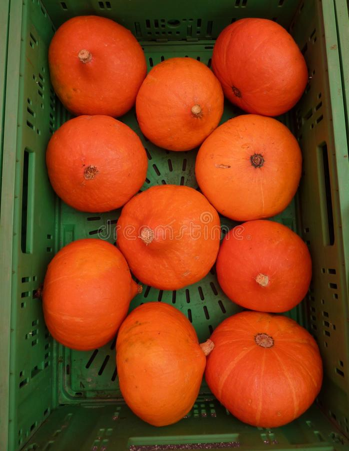 Orange pumpkins. For Halloween in a green crate royalty free stock image