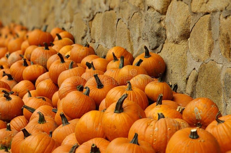 orange pumpkins стоковая фотография