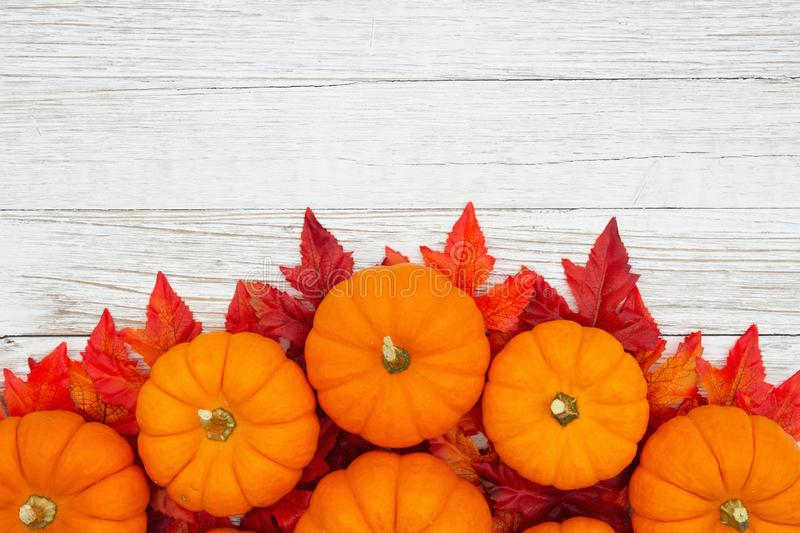 Orange pumpkins with fall leaves on weathered whitewash wood textured background stock image