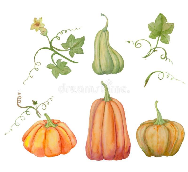 Orange pumpor, allhelgonaafton, vattenfärgillustration, frukter och sidor royaltyfri illustrationer