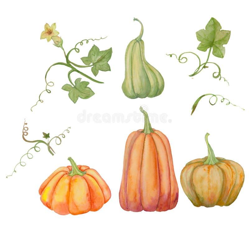 Orange pumpor, ställde in allhelgonaafton, vattenfärgillustrationen, frukter och sidor vektor illustrationer