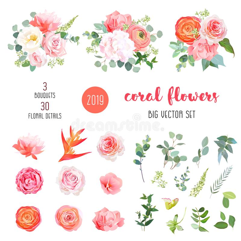 Orange Ranunculus, rosa Rose, Hortensie, korallenrote Gartennelke, Garten stock abbildung