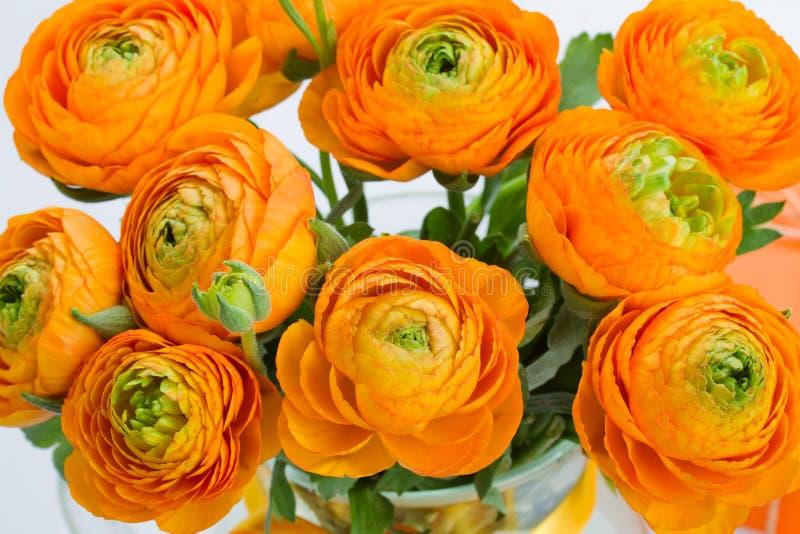 Orange ranunculusbukettslut upp arkivfoto