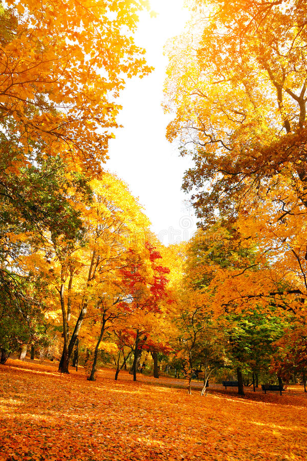 Orange and red autumn leaves stock images