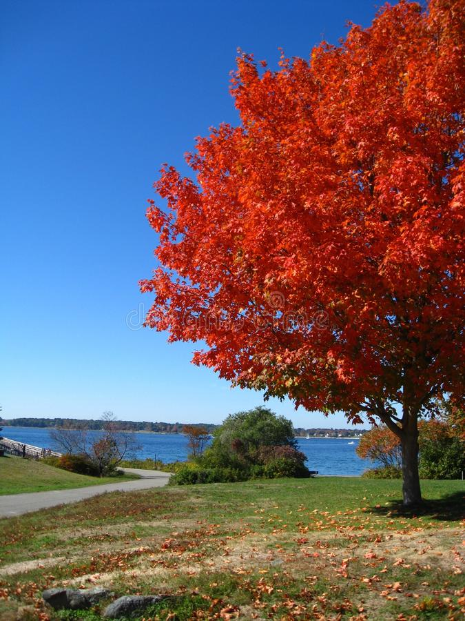 Orange Red Autumn Trees Fall in Kittery Maine royalty free stock photos