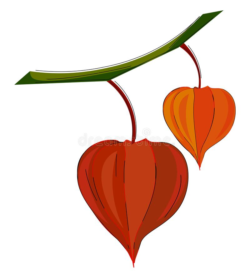 Clipart of orange and red colored physalis fruits hanging on the branches of the tree vector or color illustration vector illustration
