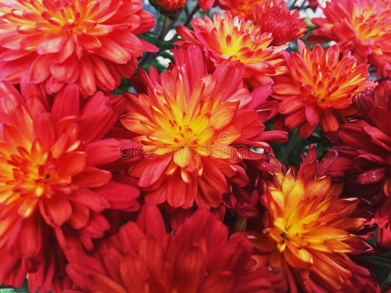 Orange Red Flowers stock photo