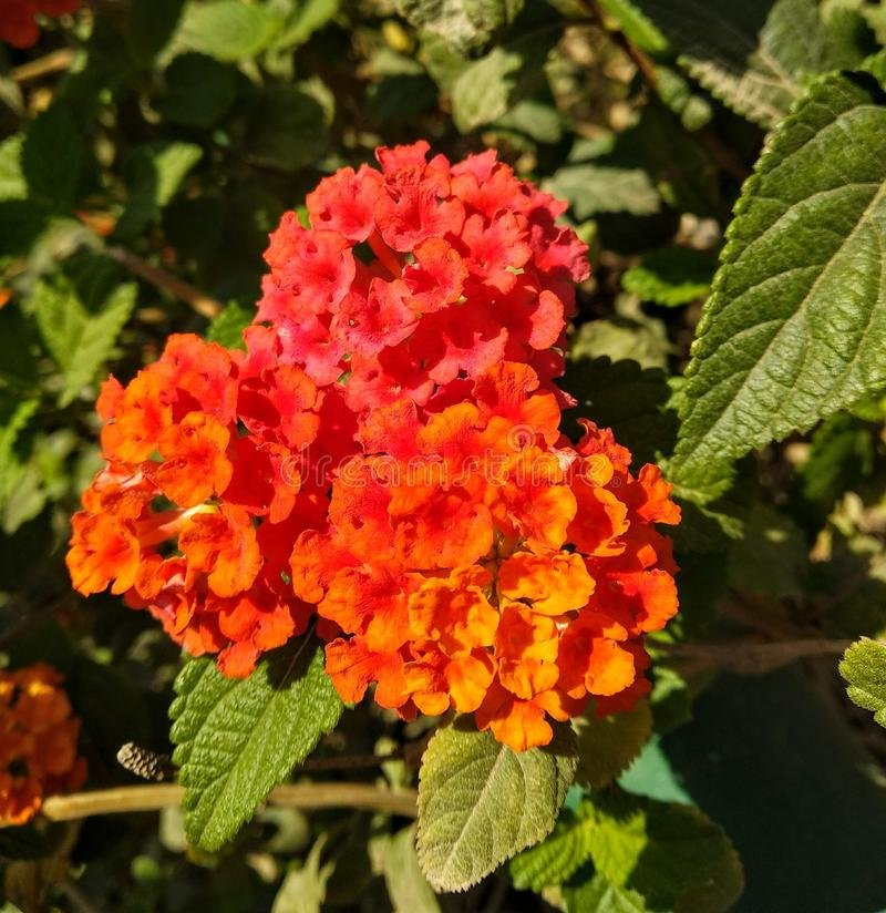 Orange and red flowers stock images