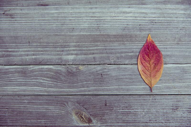 Orange and Red Leaf in Brown Wood Plank stock photography