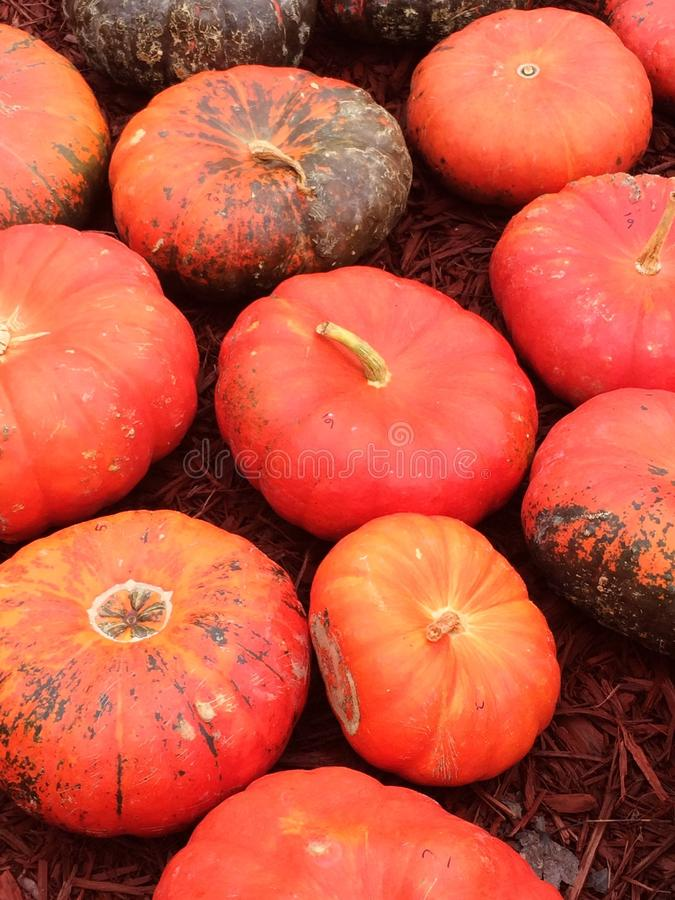 Orange-Red Pumpkins stock photo