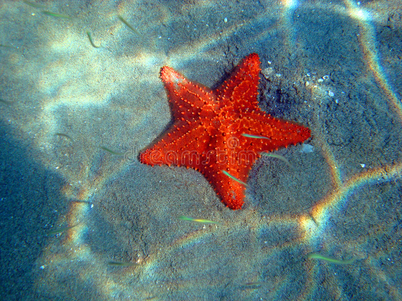 Download Orange-red Starfish At The Bottom Of The Sea Stock Image - Image: 7046595