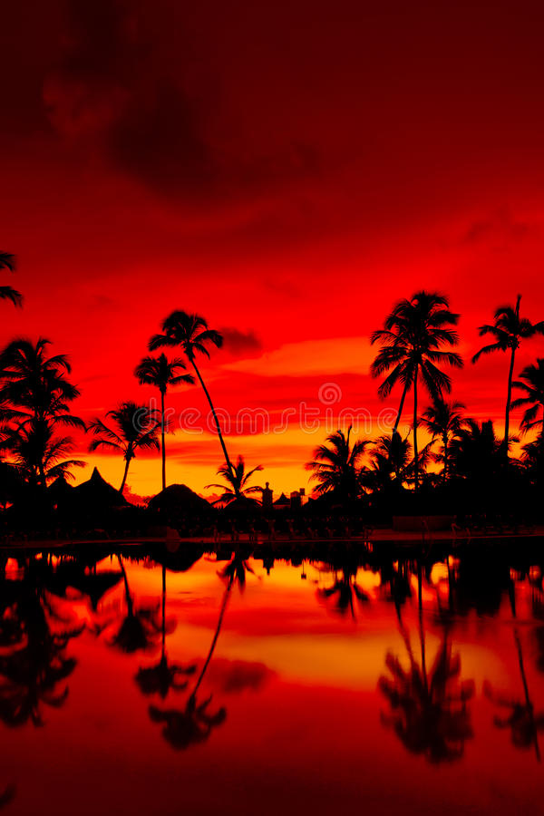Download Orange And Red Sunset Over Sea Beach With Palms Stock Photo - Image: 13333540