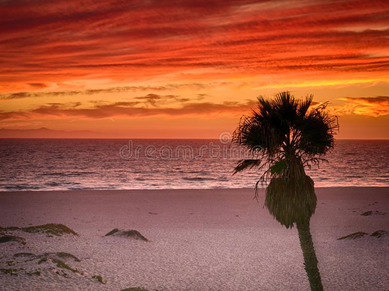 Orange red sunset on southern california beach with palm tree stock photos