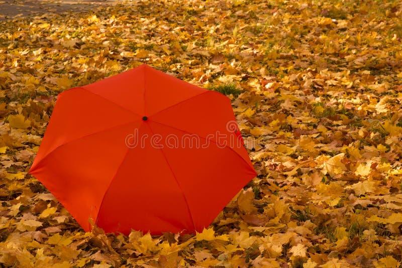 Orange Regenschirm auf dem Herbstahornblatthintergrund lizenzfreies stockbild